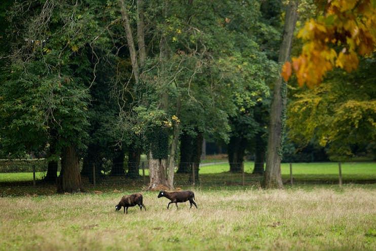 Vie-Parc-Moutons 2
