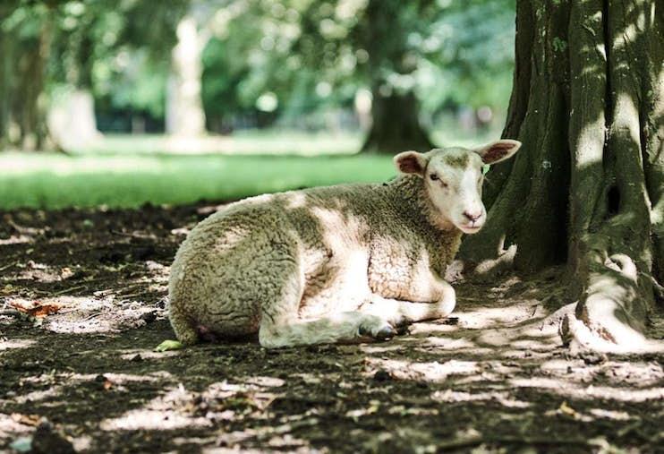 Vie-Parc-Mouton